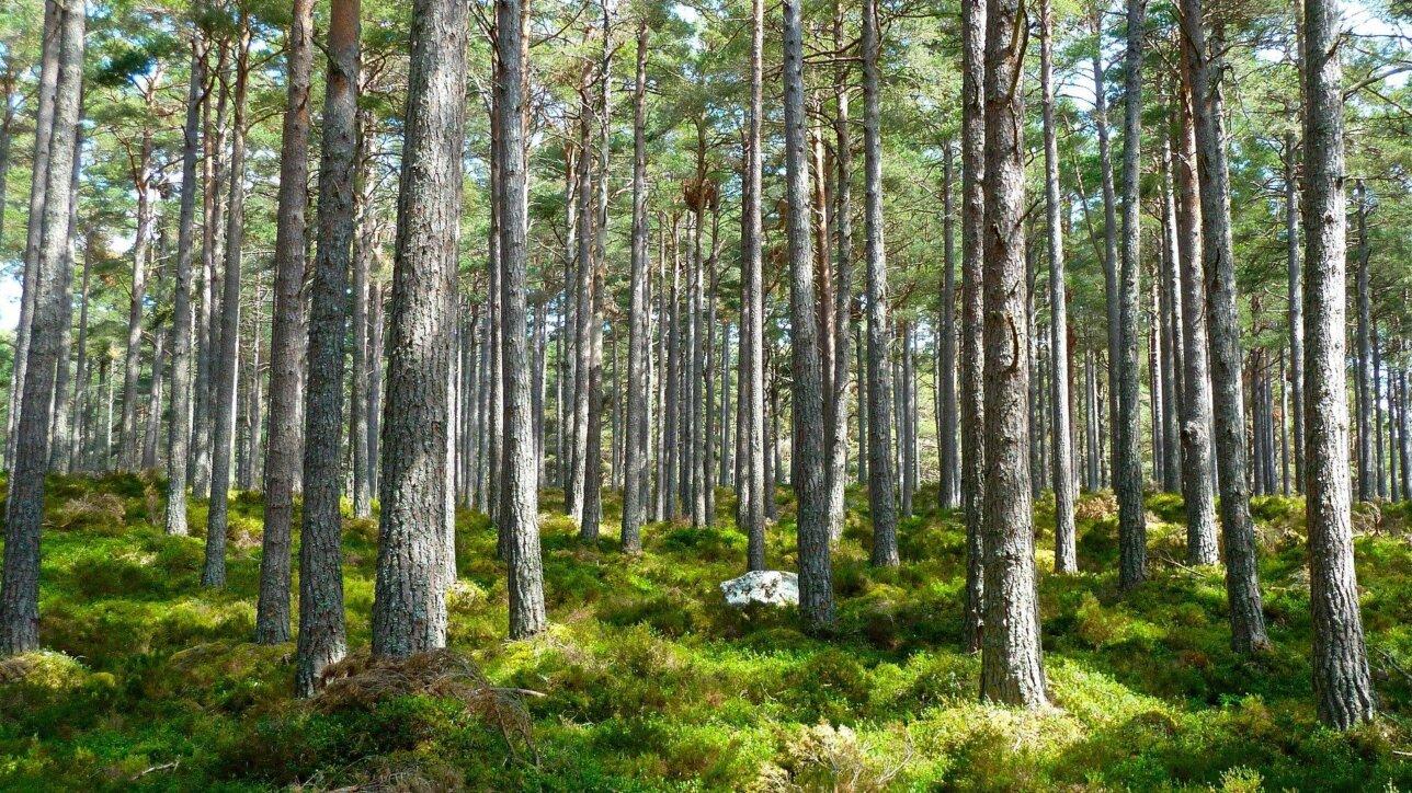 Symbolfoto eines Waldes